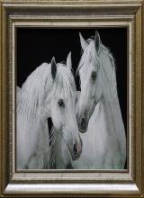 کله اسب